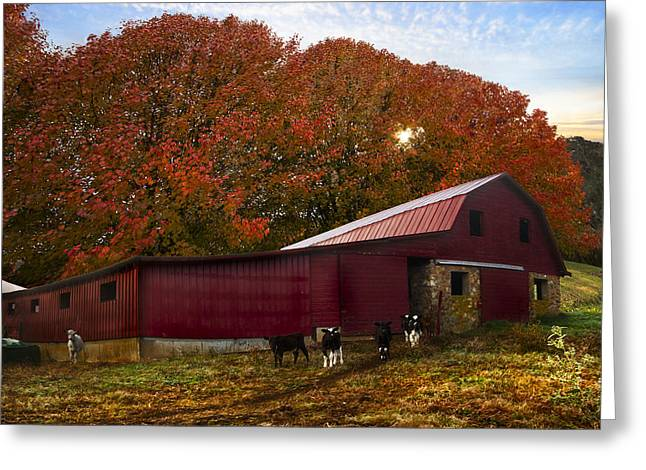 Tennessee Barn Greeting Cards - Dairy Cows Greeting Card by Debra and Dave Vanderlaan