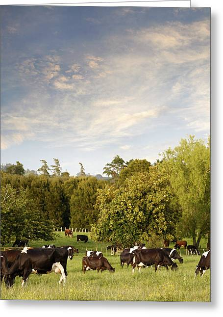 Milk Day Greeting Cards - Dairy cows Greeting Card by Les Cunliffe
