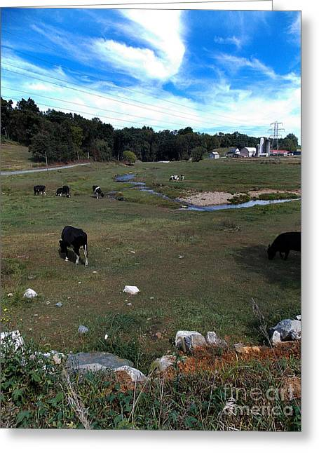 Dairy Farming Greeting Cards - Dairy Farming Greeting Card by Skip Willits