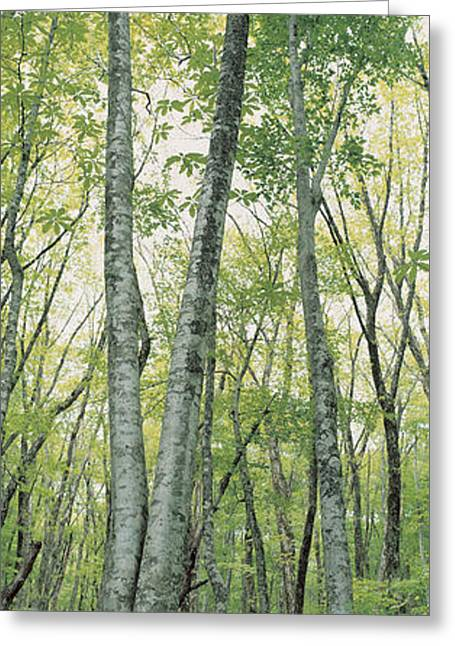 Gray Sky Greeting Cards - Daisen Tottori Japan Greeting Card by Panoramic Images