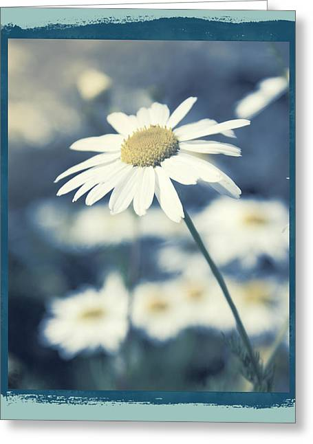 Daisy Greeting Cards - Daisies ... again - 146a Greeting Card by Variance Collections