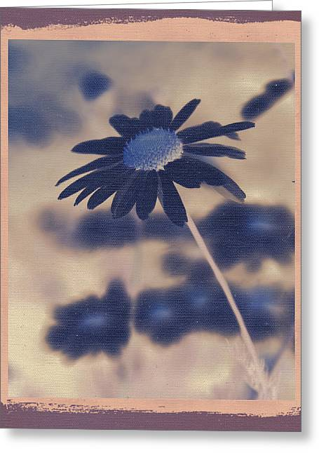 Daisy Greeting Cards - Daisies ... again - 150ab Greeting Card by Variance Collections
