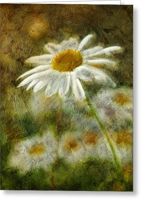 Daisy Digital Art Greeting Cards - Daisies ... again - p11at01 Greeting Card by Variance Collections