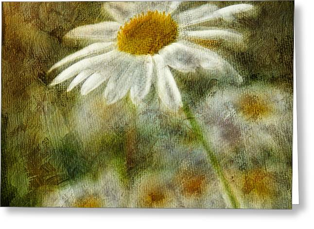 Daisies ... again - p11at01 Greeting Card by Variance Collections