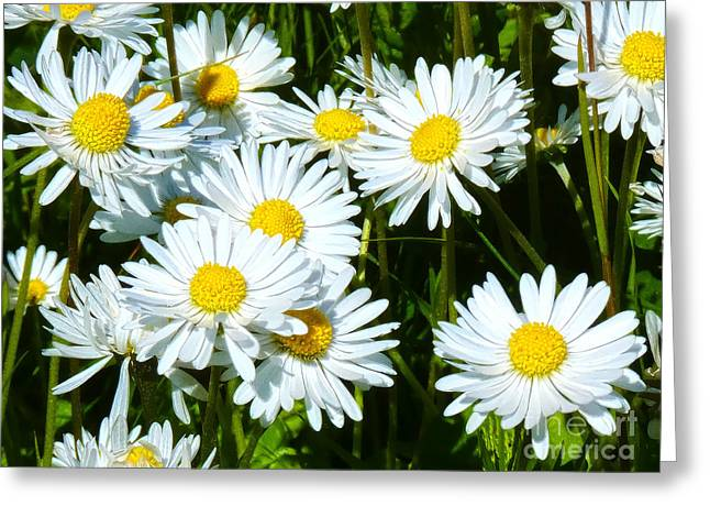 Flower Artwork Greeting Cards - Daisies Artwork Greeting Card by Lutz Baar