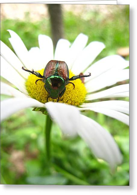 Daisies Bug Greeting Card by Jennifer E Doll