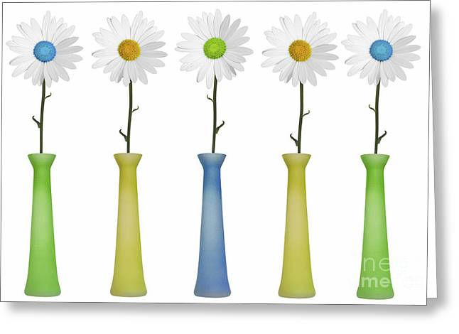 Repetition Greeting Cards - Daisies Greeting Card by Diane Diederich