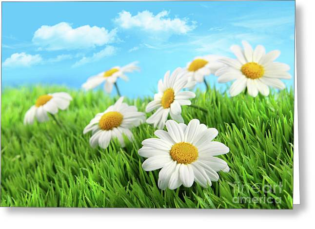 Daisies in grass against a blue sky Greeting Card by Sandra Cunningham