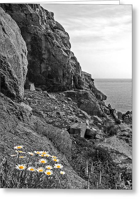 Gills Rock Greeting Cards - Daisies in the Granite Rocks Greeting Card by Gill Billington
