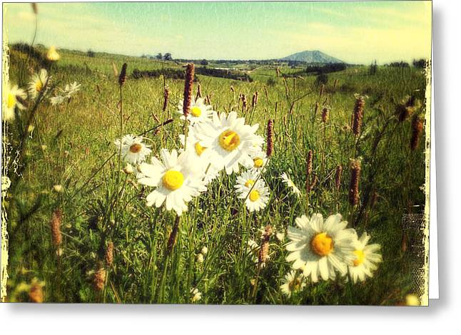 Pasture Scenes Greeting Cards - Daisies Greeting Card by Les Cunliffe