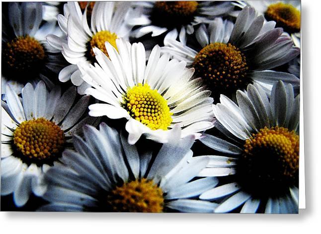 Daisy Greeting Cards - Daisies Greeting Card by Mark Rogan