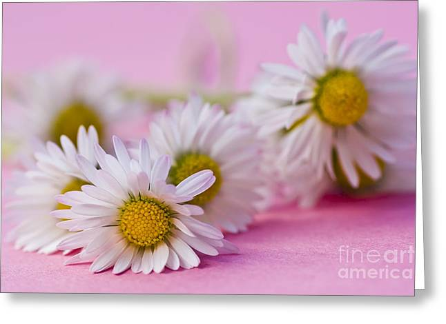 Daisies On Pink Greeting Card by Jan Bickerton