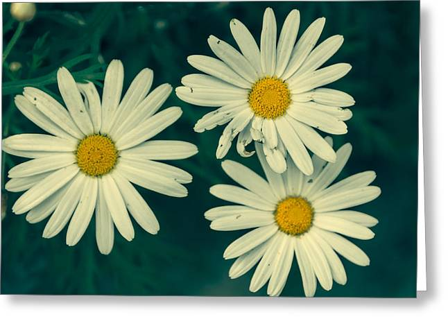 Daisy Greeting Cards - Daisies retro style Greeting Card by Chris Fletcher