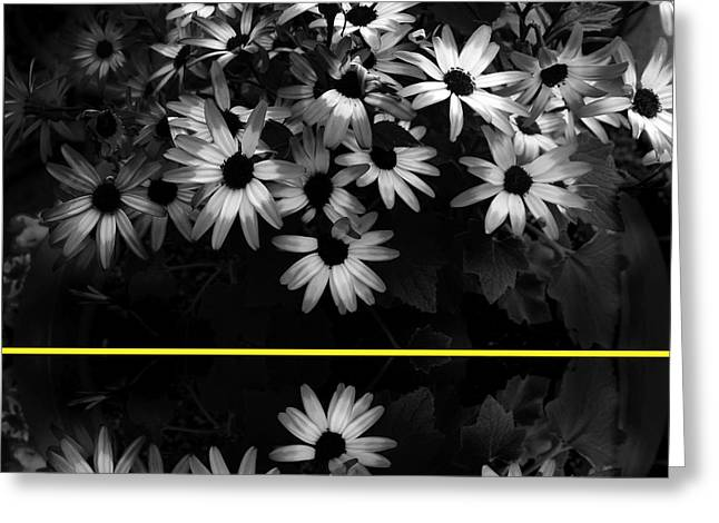 Floral Photographs Greeting Cards - Daisies with Yellow Stripe Greeting Card by Ann Powell