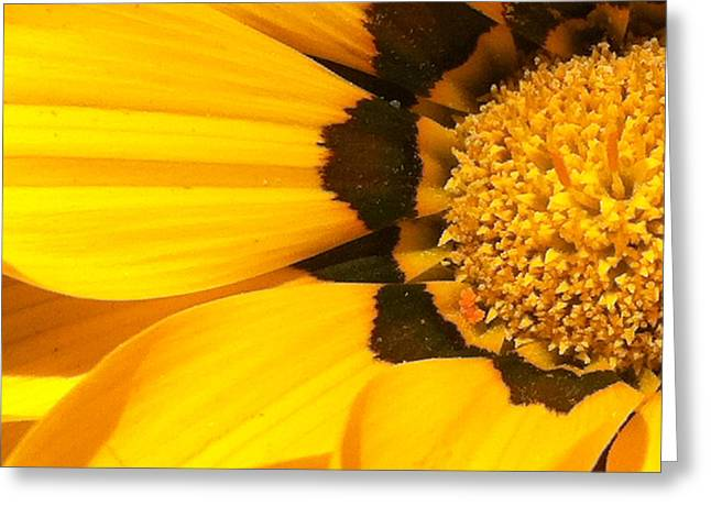 Purchase Greeting Cards - Daisy 1-5 Greeting Card by Ann Pelaez