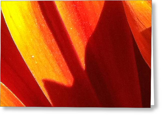 Focal Color Art Greeting Cards - Daisy 3-4 Greeting Card by Ann Pelaez