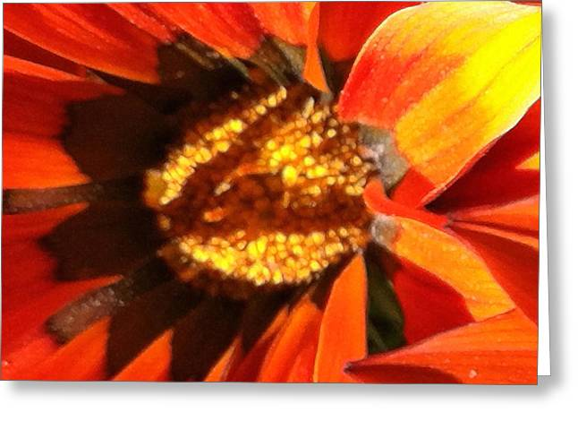 Focal Color Art Greeting Cards - Daisy 4-1 Greeting Card by Ann Pelaez