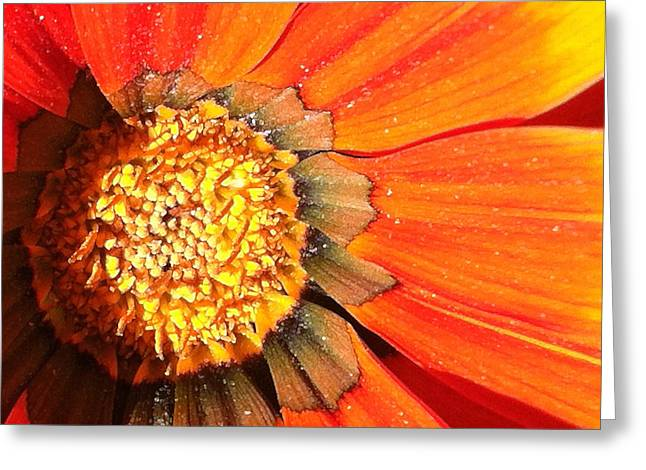 Focal Color Art Greeting Cards - Daisy 4-2 Greeting Card by Ann Pelaez
