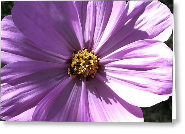 Purchase Greeting Cards - Daisy 5-1 Greeting Card by Ann Pelaez