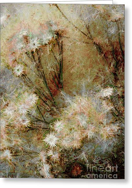 Weedy Greeting Cards - Daisy a day 22 Greeting Card by Julie Lueders