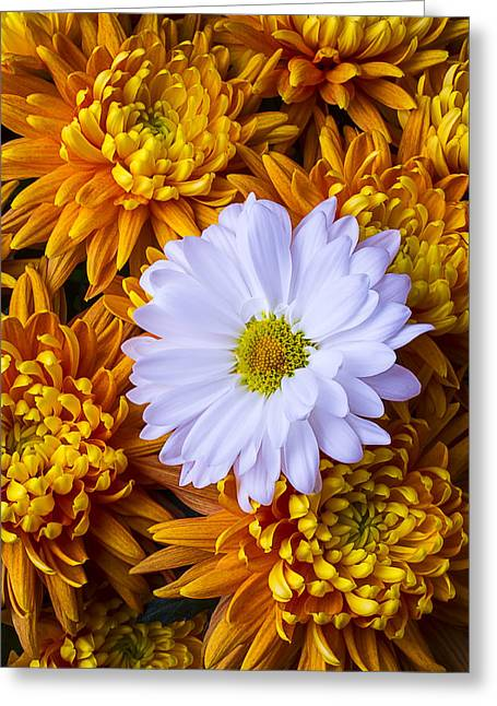 Gorgeous Flowers Greeting Cards - Daisy Among The Mums Greeting Card by Garry Gay