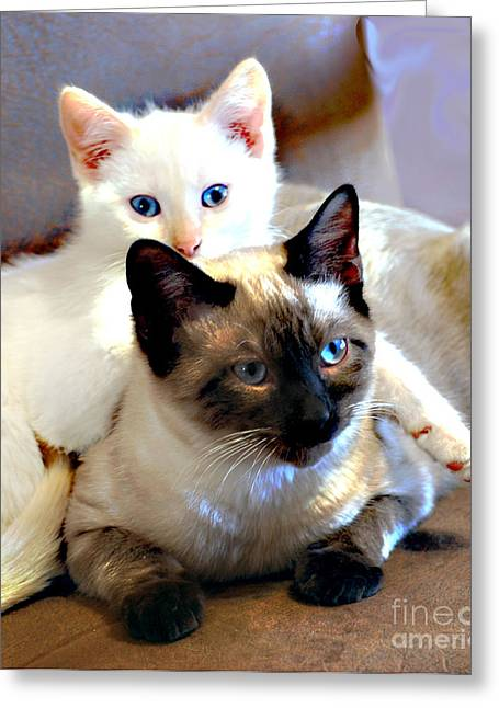 Siamese Cat Greeting Card Greeting Cards - Daisy and Leo Greeting Card by Linda Cox