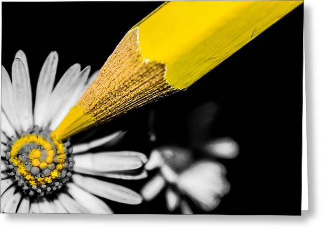 Daisy Greeting Cards - Daisy Art Greeting Card by Ian Hufton
