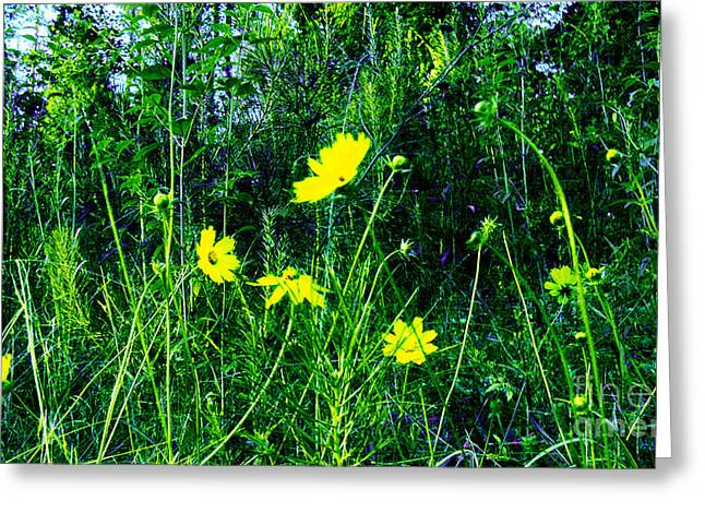Yelllow Greeting Cards - Daisy Backdropped by Woodands Greeting Card by Cheryl Raber