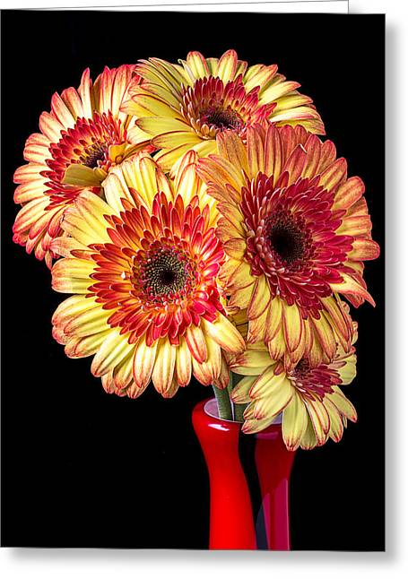 Daisy Greeting Cards - Daisy Bouquet Greeting Card by Garry Gay