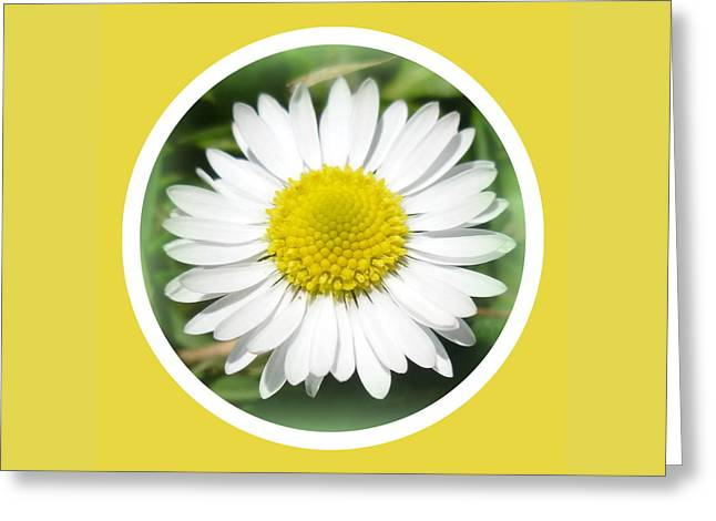 Daisy Closeup Greeting Card by The Creative Minds Art and Photography
