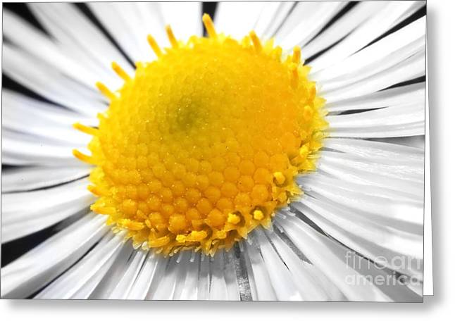 Oxe Greeting Cards - Daisy Greeting Card by Cristian M Vela