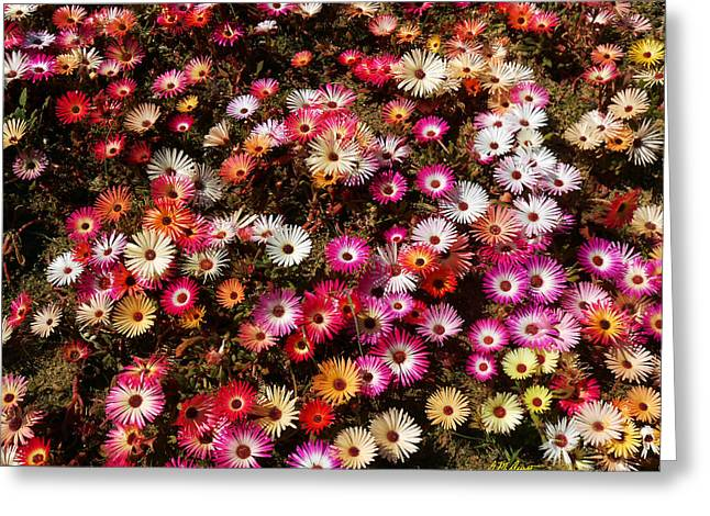Daisy Darlings Greeting Card by Michael Durst