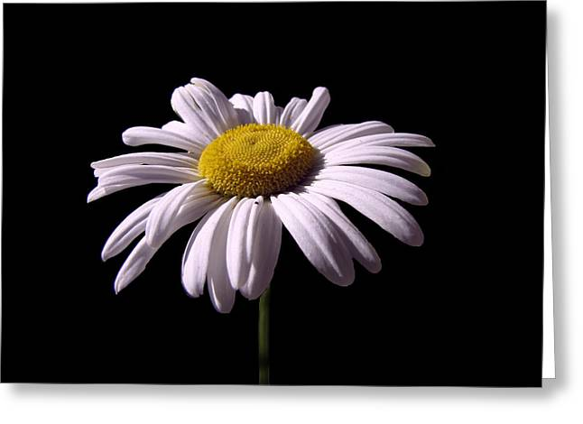 Cabin Wall Greeting Cards - Daisy Greeting Card by David Dehner