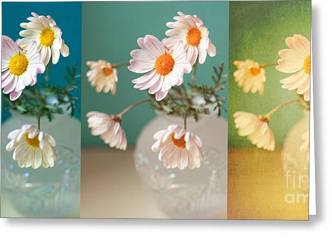 """indoor"" Still Life Digital Art Greeting Cards - Daisy Daydreams Greeting Card by Susan Gary"
