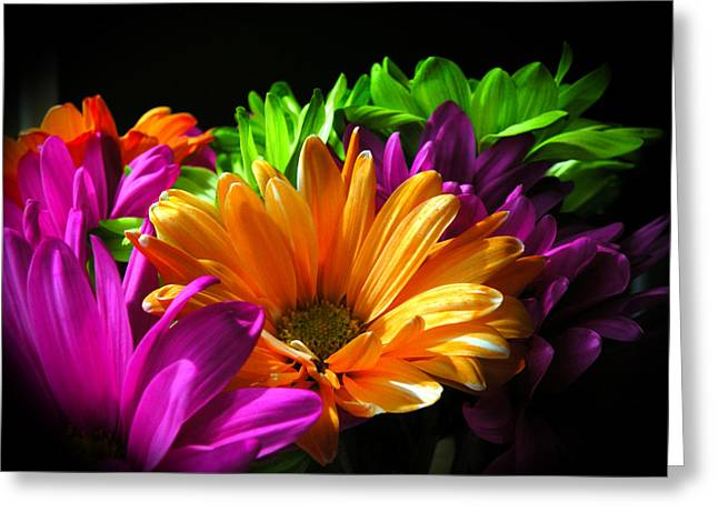 Daisy Delight Greeting Card by David Quist