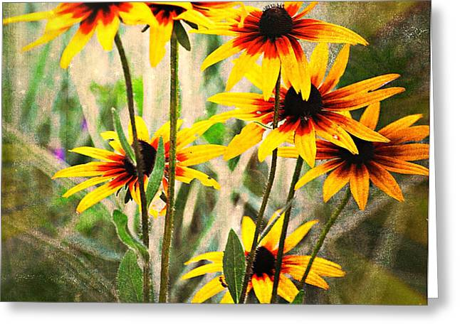 Daisy Do Greeting Card by Marty Koch