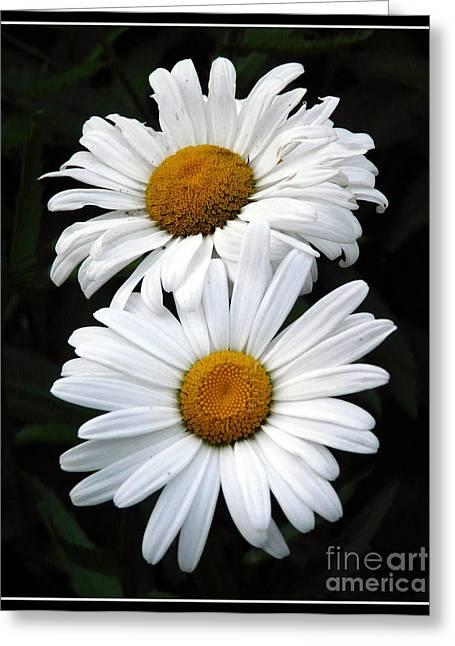 Daisy Duet Greeting Card by Avis  Noelle