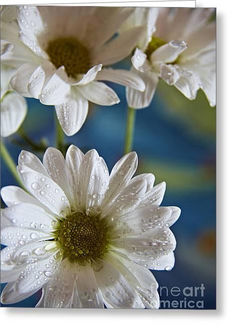 Eyzen Medina Greeting Cards - Daisy Greeting Card by Eyzen M Kim