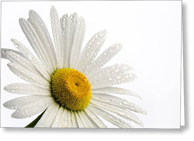 Designs On Face Greeting Cards - Daisy Face Greeting Card by Mary Jo Allen