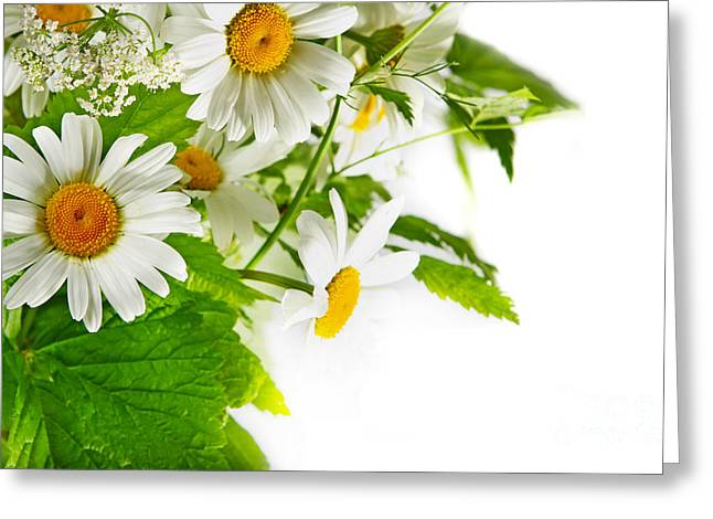 Free Flower Delivery Greeting Cards - Daisy Flowers Greeting Card by Boon Mee