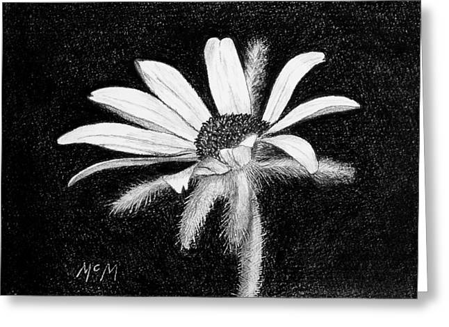Daisy Drawings Greeting Cards - Daisy Greeting Card by Garry McMichael
