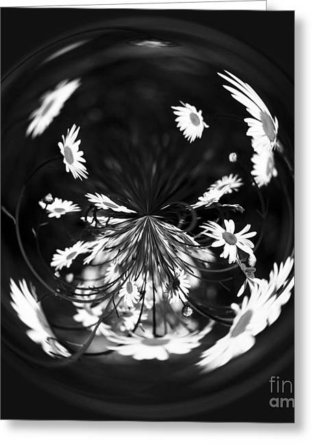 Process Greeting Cards - Daisy Globe Greeting Card by Anne Gilbert