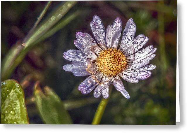 Dewdrops Digital Greeting Cards - Daisy Greeting Card by Hanny Heim