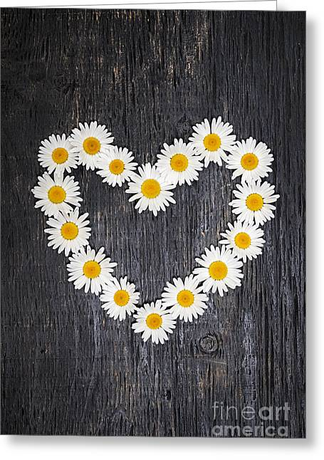 Daisy Greeting Cards - Daisy heart on dark wood Greeting Card by Elena Elisseeva