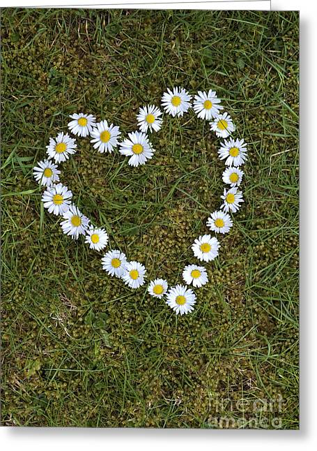 Luv Greeting Cards - Daisy Heart Greeting Card by Tim Gainey