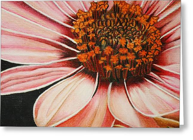 Macro Drawings Greeting Cards - Daisy in Pink Greeting Card by Bruce Bley