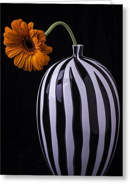 White Daises Greeting Cards - Daisy In Striped Vase Greeting Card by Garry Gay