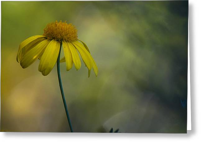 Artistic Photography Greeting Cards - Daisy In The Mist Greeting Card by Constance Fein Harding