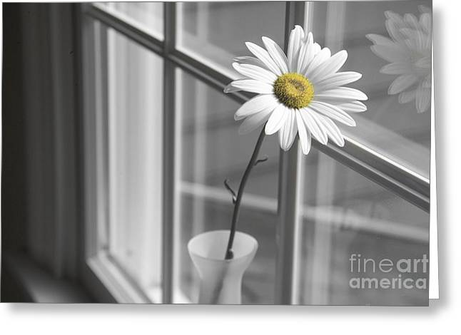 Daisy In The Window Greeting Card by Diane Diederich