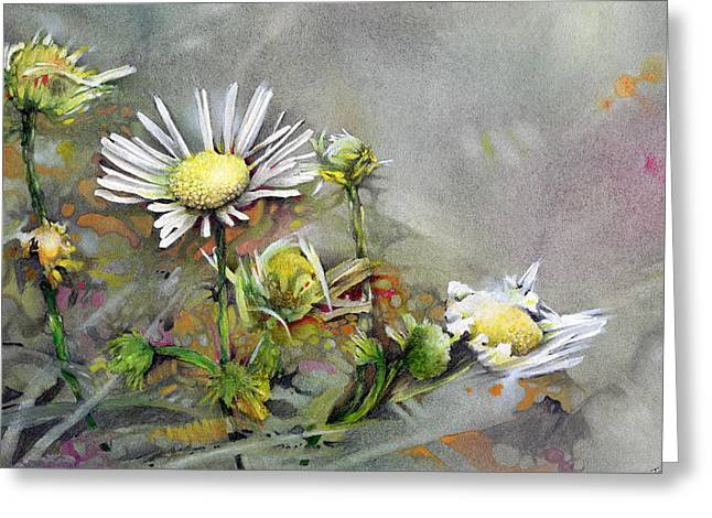 Indiana Flowers Paintings Greeting Cards - Daisy Greeting Card by John Christopher Bradley
